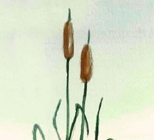 Emergent Weeds